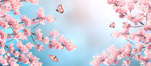 Branch Of The Blossoming Sakura And Three Butterflies