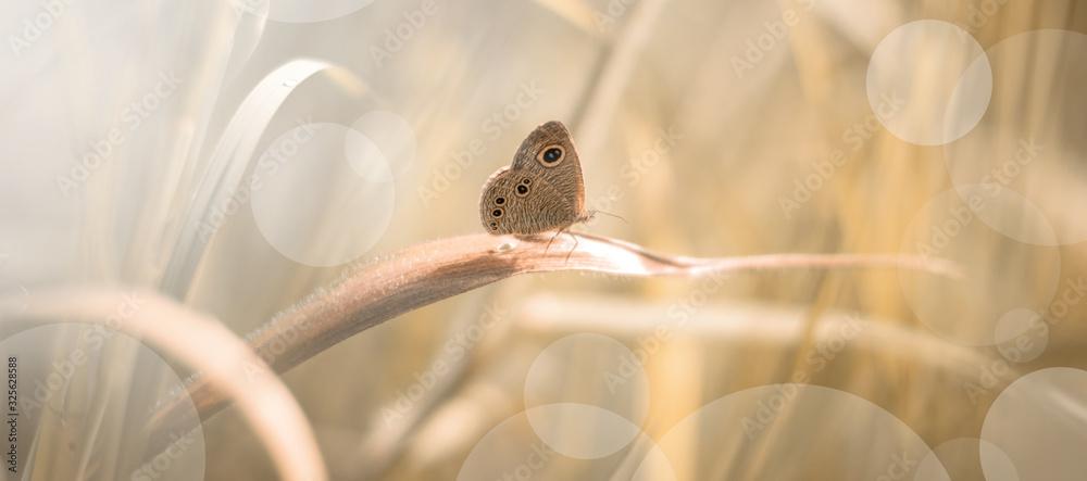 Fototapeta Beautiful Butterfly in Bush