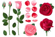 Pink And Red Rose. Sweet Roman...
