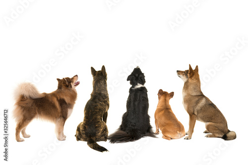 Various breeds of dogs looking up seen at the back side isolated on a white back Canvas Print