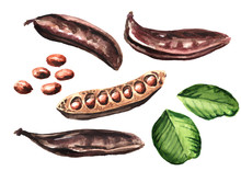 Carob Pods, Beans And Green Le...