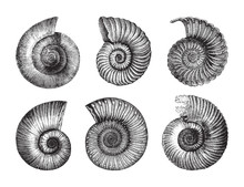 Shell Fossil Collection (Jurassic Period) / Vintage Illustration From Brockhaus Konversations-Lexikon 1908