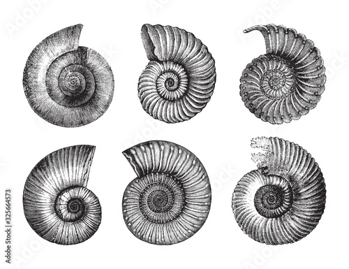 Canvastavla Shell fossil collection (Jurassic period) / vintage illustration from Brockhaus
