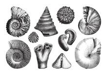 Shell Fossil Collection (Jurassic Period) / Vintage Illustration From Brockhaus Konversations-Lexikon 1908