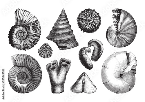 Shell fossil collection (Jurassic period) / vintage illustration from Brockhaus Wallpaper Mural