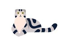 Lying Scottish Fold Cat Breed ...