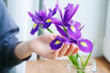 Woman Hand Touching Irises In A Vase On Windowsill