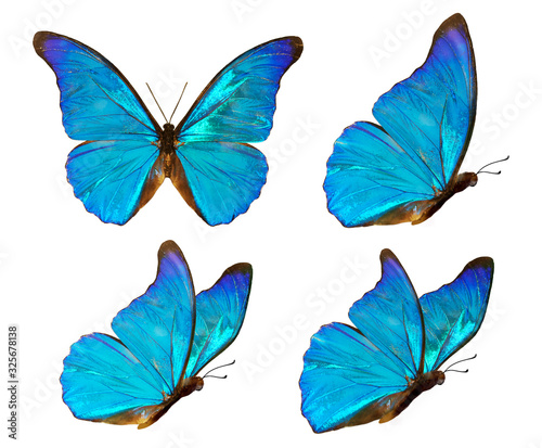 Set of four beautiful blue butterflies Cymothoe excelsa isolated on white background Fototapet