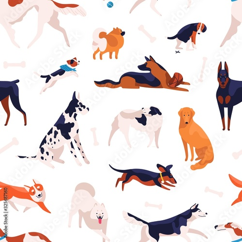 obraz lub plakat Various domestic doggy breeds seamless pattern. Different cute purebred dog posing, sitting, standing and playing isolated on white background. Adorable pet animal type vector flat illustration