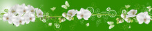 White Butterflies And Orchids ...