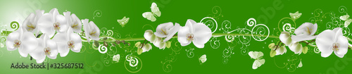 Fototapeta white butterflies and orchids on green stripe obraz