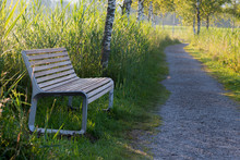 Lonely Bench In Front Of Birch Tree Alley, Early Morning Scenery