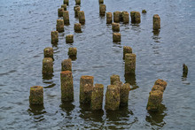 Old Rusty Piles From An Abandoned Pier