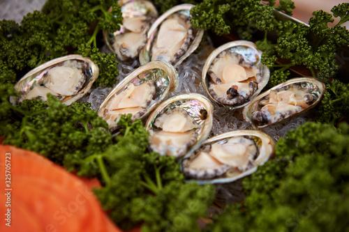 Fresh raw abalone at buffet Canvas Print