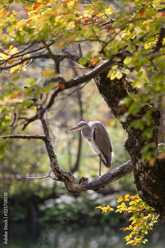 Canvas-taulu Plitvice Lakes National Park