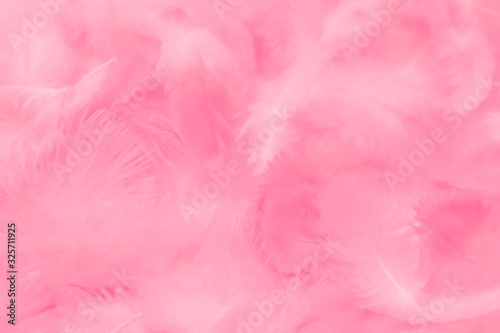 Beautiful abstract colorful white and pink feathers on white background and soft white feather texture on white pattern and light pink background valentine day
