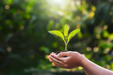 hand children holding young plant with sunlight on green nature background. concept eco earth day