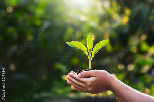 hand children holding young plant with sunlight on green nature background. concept eco earth day - 325718301