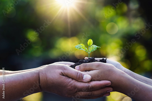 mother and child holding young plant with sunlight on green nature background. concept eco earth day