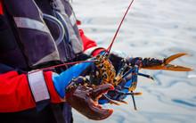 Lobster, Little Bernera Lagoon...