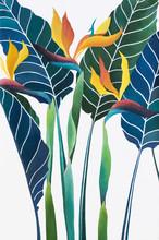 Strelitzia Reginae Flower (Bir...