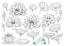 .A Collection Of Lotus Sketche...