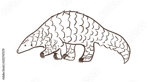 Fotomural Pangolin or scaly anteater, a scales covered mammal from tropical areas such as Africa and Asia