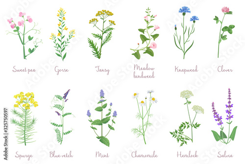 Fototapeta Wild herbs set with names isolated. Wildflowers, herbs, leafs. Garden and wild foliage, flowers, branches vector illustration obraz