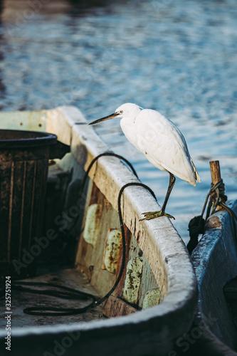 Photo Oiseau aigrette posée sur le bord d'un bateau