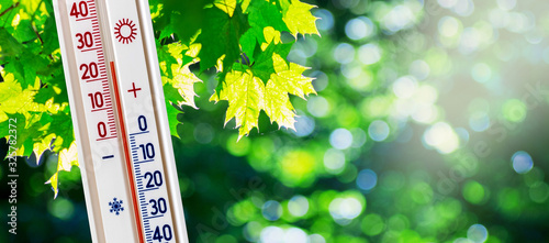 Fototapeta The thermometer on the background of green maple leaves in sunny weather shows 25 degrees heat_ obraz