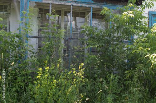 Old overgrown shop with broken windows in Prokopievsk Canvas Print