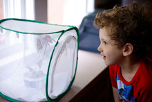 Young Boy Watching Monarch Butterflies Emerge From A Chrysalis