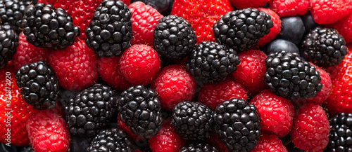 Cuadros en Lienzo Berry background