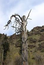 Hillside And Tree
