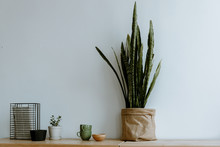 Potted Plant Against A Gray Wall On A Wooden Table