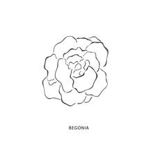 Hand Drawn Begonia Flower. Plant Design Elements.