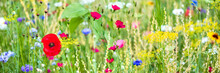 Panorama, Colorful Flower Mead...
