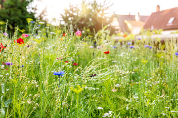 Urban gardening with a wildflower meadow in the own garden, insect protection