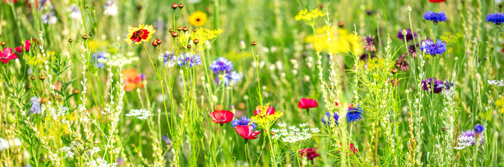 Natural habitat for insects, wildflowers and wild herbs on a flower field, Banner