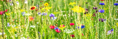 Fototapeta Natural habitat for insects, wildflowers and wild herbs on a flower field, Banner obraz