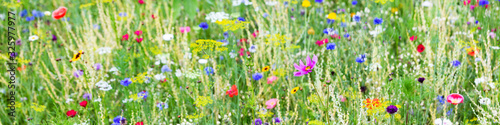 Panorama, wildflower meadow with wild herbs and flowers Wallpaper Mural