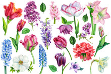 Watercolor Flora, Spring Flowers On An Isolated Background, Set Of Tulip, Hyacinth, Daffodil, Lilac, Roses, Botanical Illustration