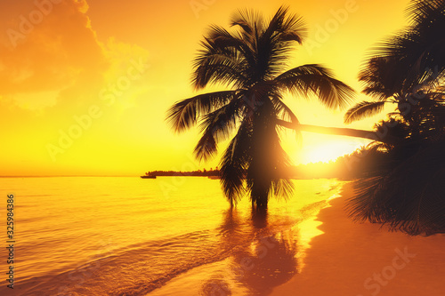 Fototapeta Silhouette of palm trees on a tropical island beach, sunrise shot obraz na płótnie
