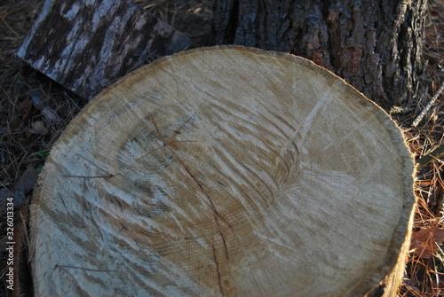 Fototapeta drewno plaster drewna obraz