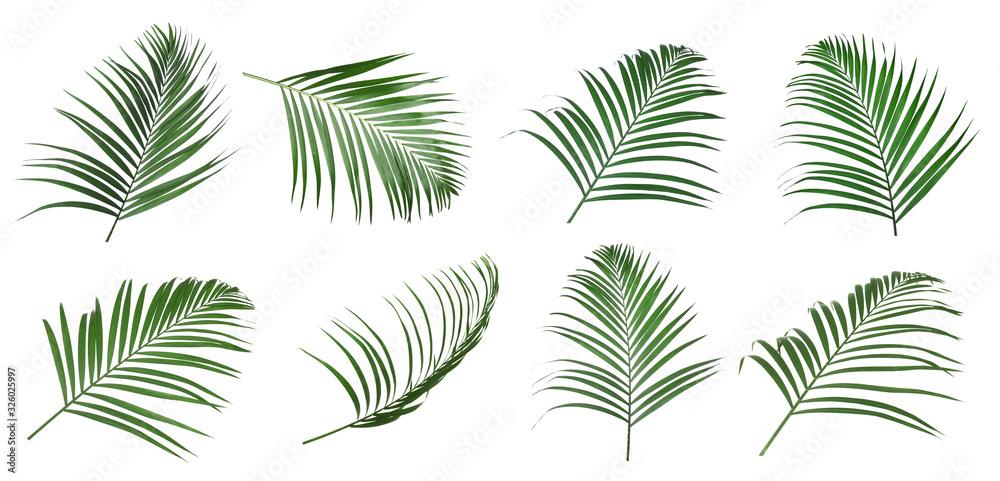 Fototapeta Set of tropical leaves on white background