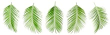 Set Of Tropical Leaves On Whit...