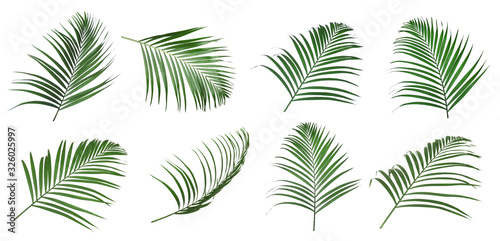 Fototapeta Set of tropical leaves on white background obraz
