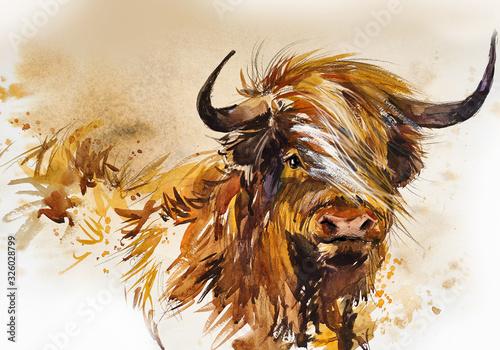 Fotografia Bull
