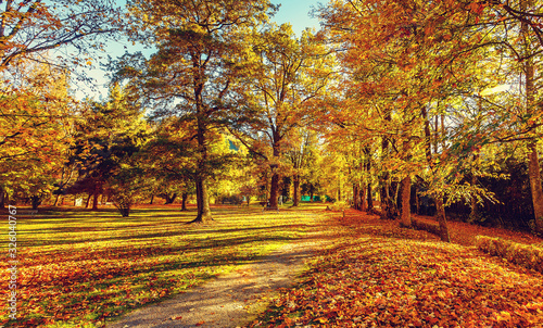 Wall mural - Autumn forest nature. Vivid morning in colorful forest with sun rays through branches of trees. Scenery of nature with sunlight. Wonderful natural background. Fairy tale woodland