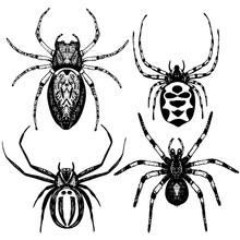 Hand Drawn Vector Spider